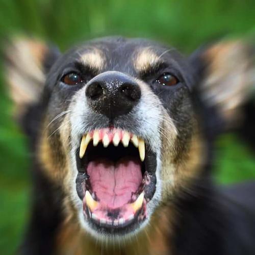 Когда собака не друг человека -Статьи и видео
